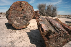 Petrified wood, Arizona